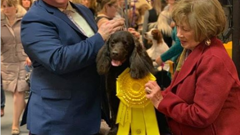 Lois and Blew placed at the Westminster Kennel Club Dog Show over the weekend.
