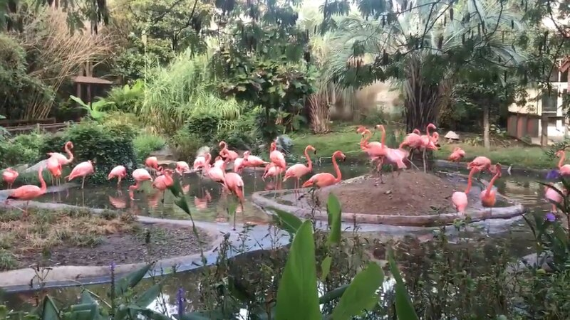 Riverbanks Zoo staff is starting to move flamingos to safety. (WIS)