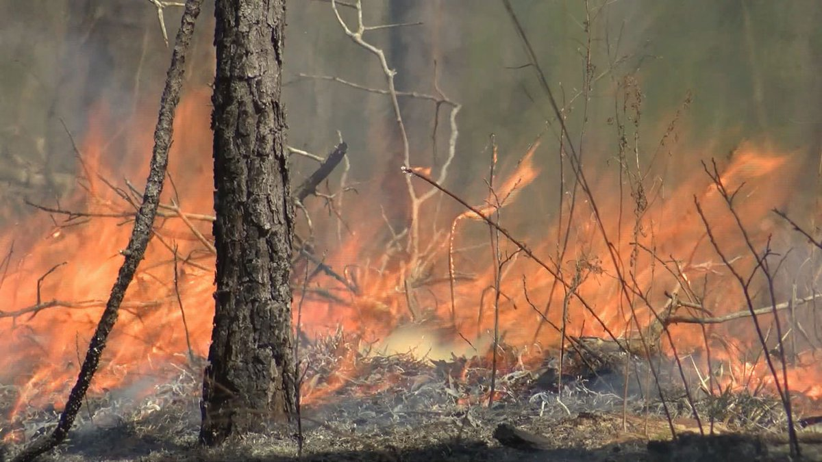 According to the State Forestry Commission, 98% of wildfires in South Carolina are started by...