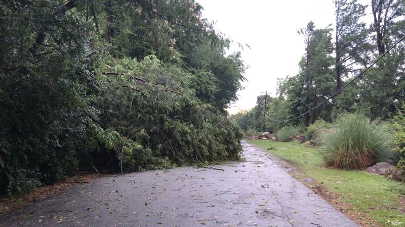 This tree was knocked down overnight on Bentley Drive. Several trees across the Midlands were...