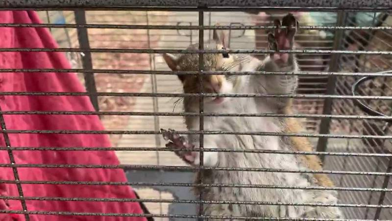 Deputies discovered a squirrel during a drug bust
