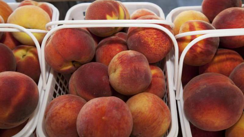 One freeze could hurt the peach crop.