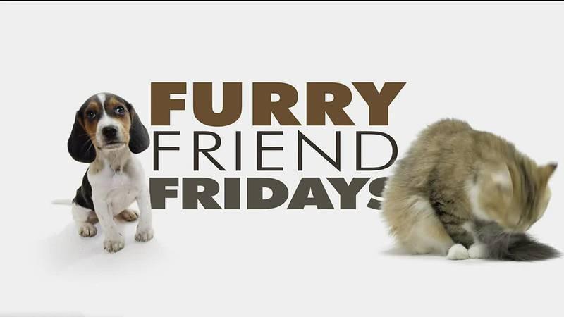 Furry Friend Friday - Tiffany
