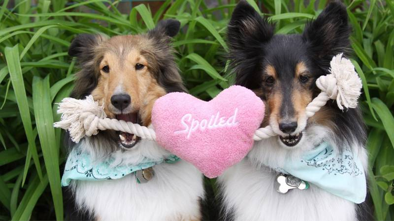 Spoil your dog day