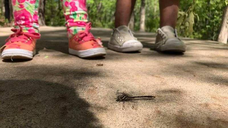 Foster children in dire need of foster homes, as SC faces shortage. (Source: WIS)
